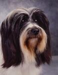 KA_puppy12A
