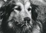 KA_066_puppyDog