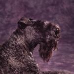 KA_dogs_curly