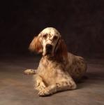 KA_dogs_spanish