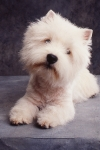 KA_puppy1