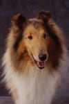 KA_puppy11A