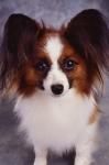 KA_puppy2A