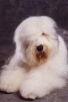 KA_puppy3