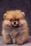 KA_puppy5A