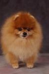 KA_puppy6