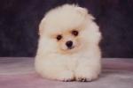 KA_puppy8A