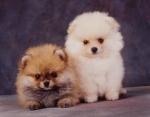 KA_puppy9A