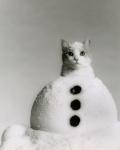 carmel_snowcat001